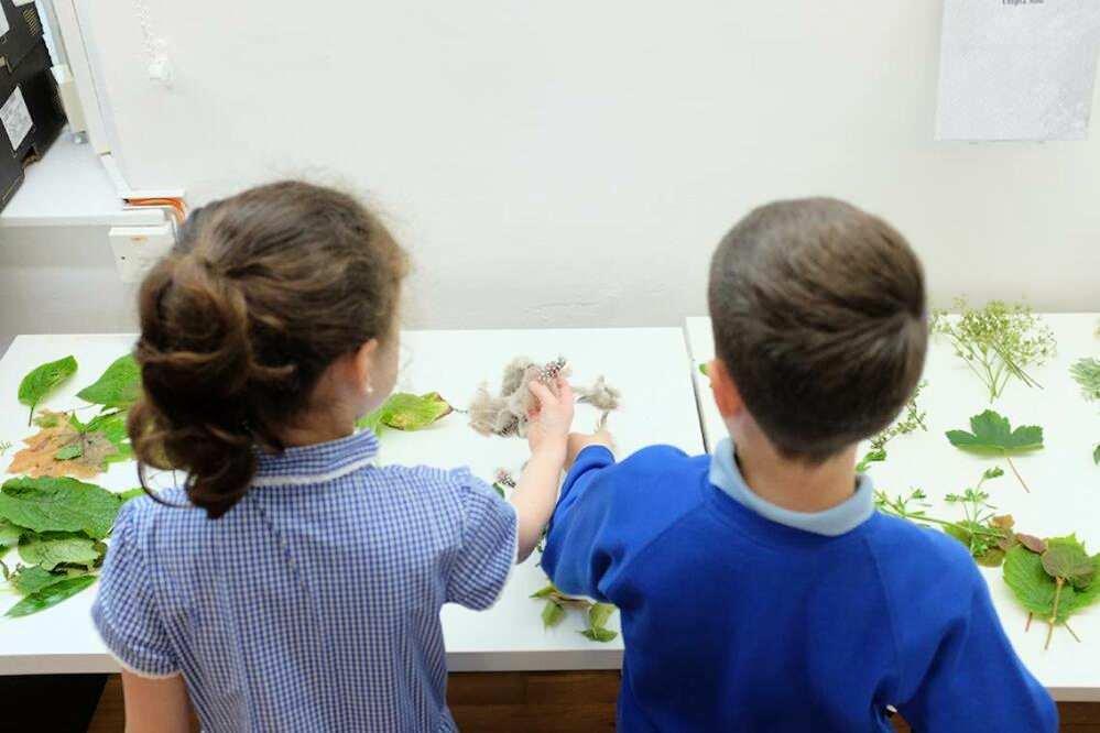 Green Classrooms