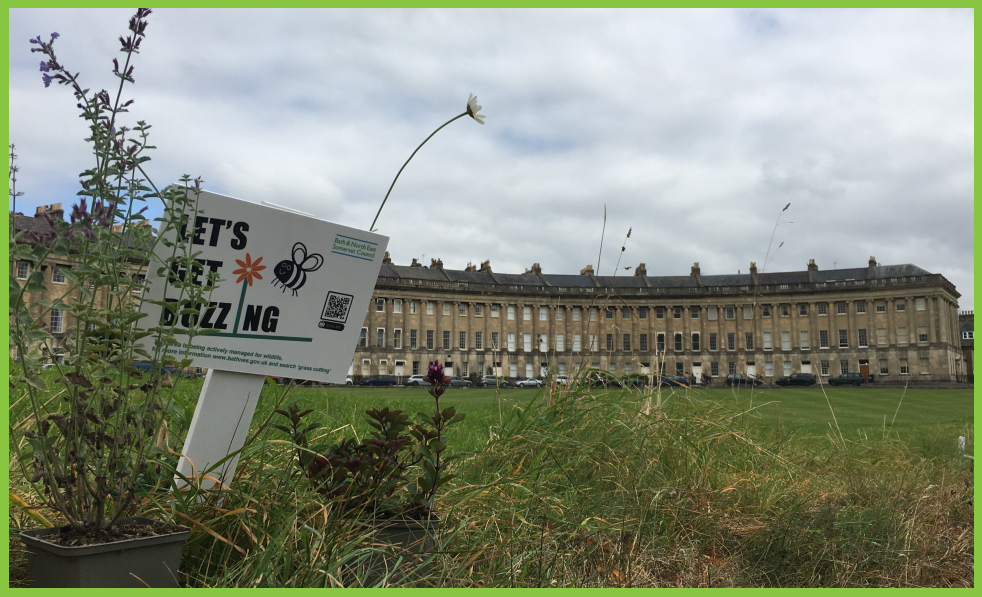 Wildflowers at the Royal Crescent